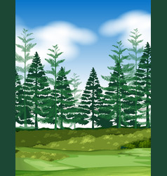 forest scene with pine trees vector image
