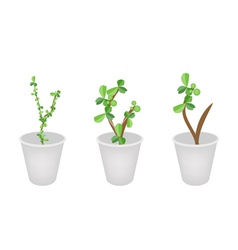 Three lovely bonsai trees in flower pots vector