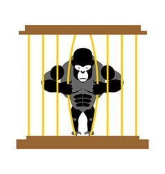 Gorilla in cage in zoo strong scary wild animal in vector