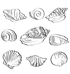 Set seashells outline vector image vector image