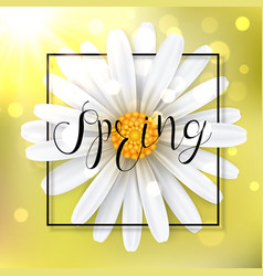 Spring background with chamomile flower vector