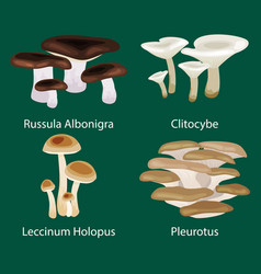 isolated edible natural mushrooms in nature vector image