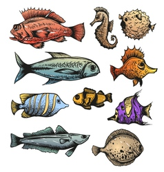 Set of fishes isolated vector