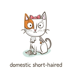 Domestic short-haired cat character isolated on vector