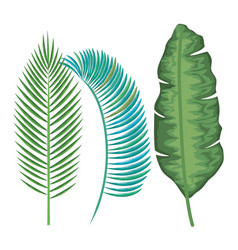 Tropical and exotic palms leafs vector