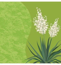 Background with flowers Yucca vector image vector image