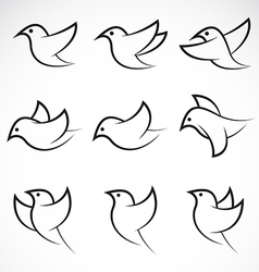 Bird group vector