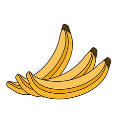 Colorful silhouette set bananas fruit vector