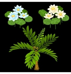 Three water lilies and small palm tree vector