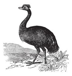 Emu vintage engraving vector image