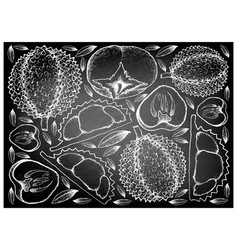 Hand drawn of durian and persimmon on chalkboard b vector