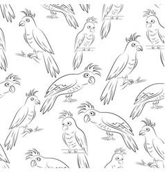 parrots contours seamless vector image vector image