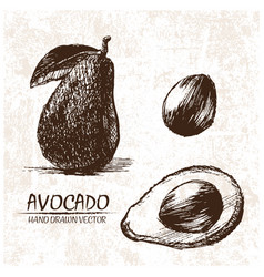 Digital detailed avocado hand drawn vector