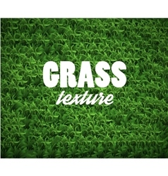 Green soccer grass field vector