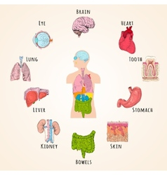 Human anatomy concept vector image vector image