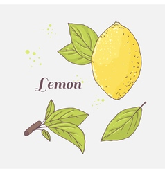 Set of hand drawn lemon and leaves doodle fruit vector