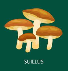 Edible mushroom suillus luteus isolated wild vector