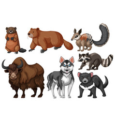 Many types of wild animals vector
