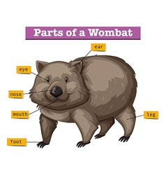 Diagram showing parts of wombat vector