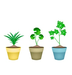 Three fresh herbal plant in ceramic flower pots vector