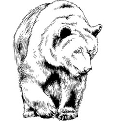 Brown bear is drawn in ink by hand vector