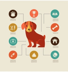Dogs infographic and icon set vector image vector image
