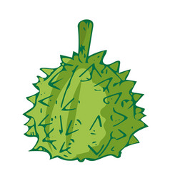 Durian the tropical fruit isolated vector