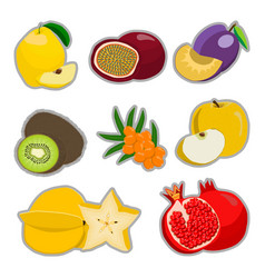 the theme fruits vector image