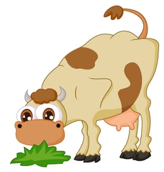 Cartoon cow eating grass vector image vector image