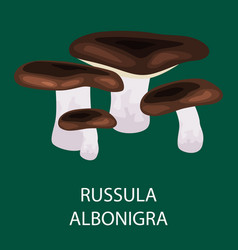 russula acetolens isolated wild foraged mushroom vector image