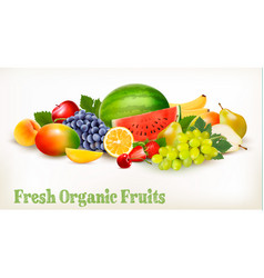 Big collection of different fresh fruit vector