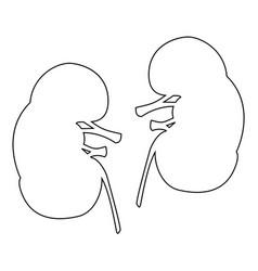 Kidney the black color icon vector