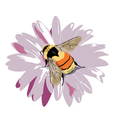 Bumble-bee on a flower vector