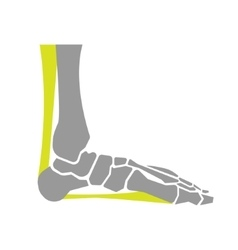 Flat Icon of Foot Bones on White Background vector image vector image