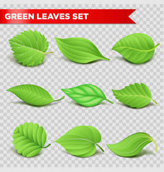 green leaf 3d relaistic icons eco environment or vector image