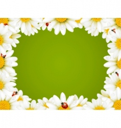 chamomile floral frame vector image vector image