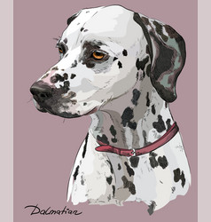 coloful hand drawing portrait of dalmatian vector image