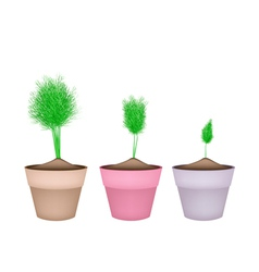 Fresh green dill in ceramic flower pots vector