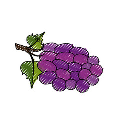 Bunch of grapes icon vector