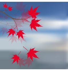 Red maple leaves on the branches Japanese red vector image