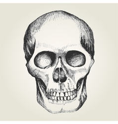 Sketch of a human skull vector image