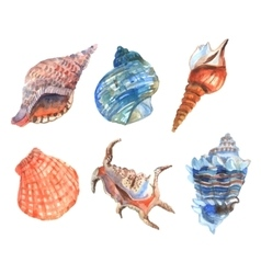 Watercolor shell set vector