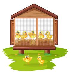 little chicks in chicken coop vector image vector image