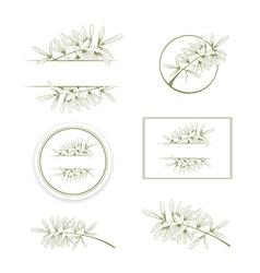 Olive or argan oil vintage design collection vector