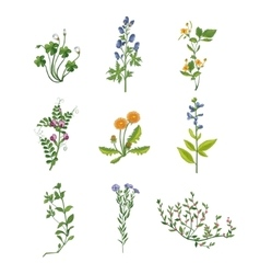 Wild flowers hand drawn collection of detailed vector