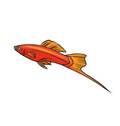 Isolated swordtail aquarium fish vector