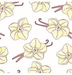 Hand drawn seamless pattern with vanilla vector