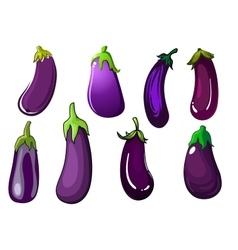 Organic fresh purple eggplant vegetables vector image vector image