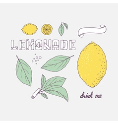 Set of hand drawn elements for lemonade or soda vector