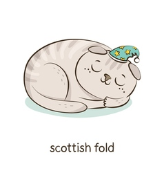 Scottish fold cat character isolated on white vector